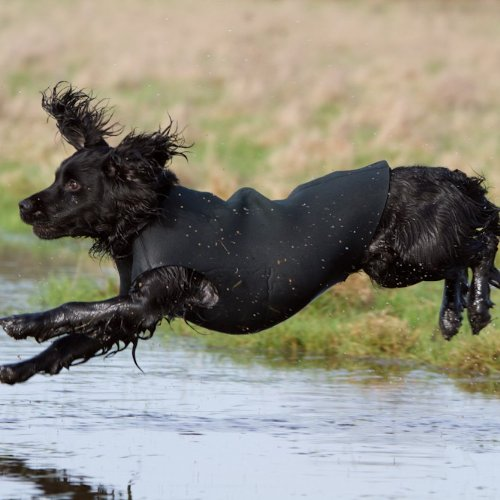 Country Mun Wasserfester Hundeanzug